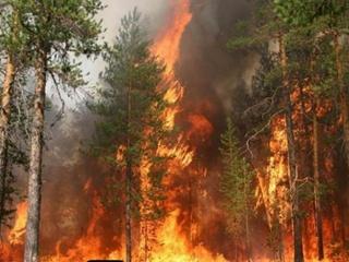 Пожары в Одесской области уничтожили восемь дач
