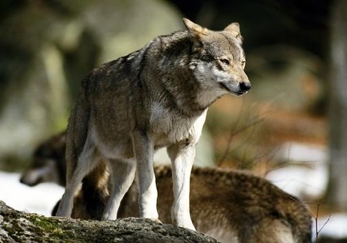 Из зоны АТО убегают даже звери