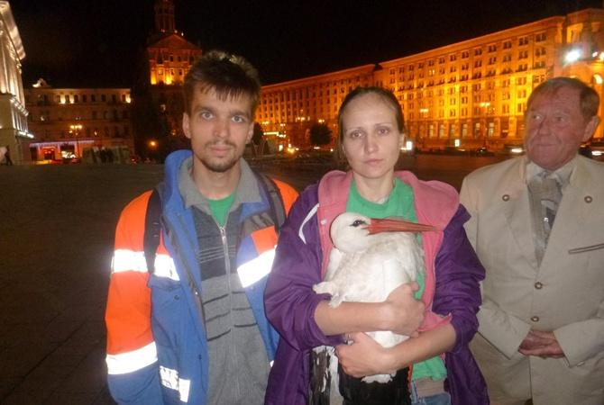 С киевского Майдана эвакуировали аиста