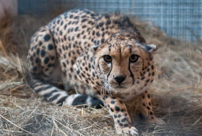 В Харькове будут разводить экзотических животных