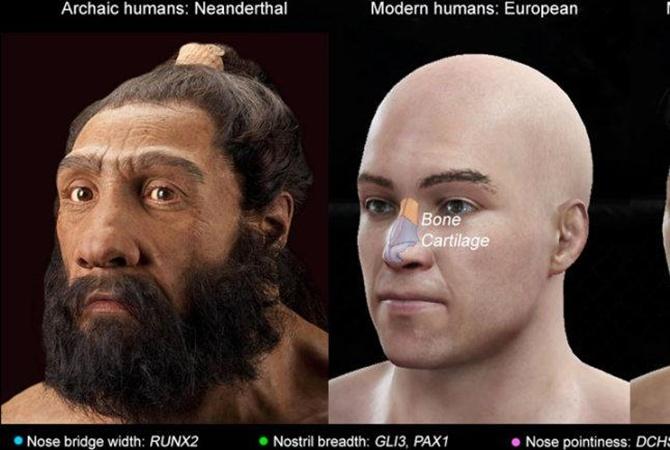 Ученые нашли ген курносости Найдены гены носа
