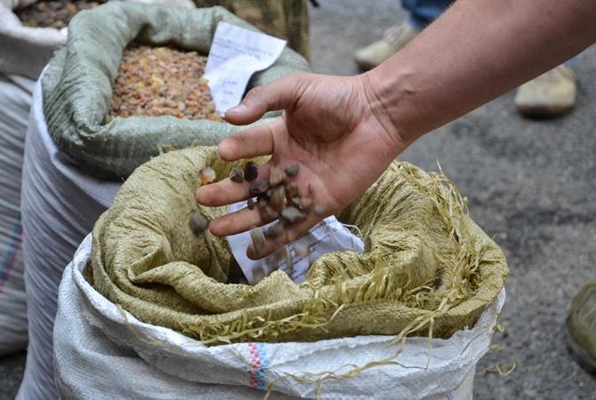 Троян: «Янтарная мафия» навсе 100% под контролем милиции