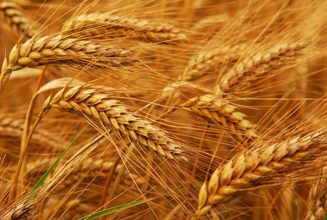 КНР отказывается экспортировать из государства Украины зернобобовые культуры