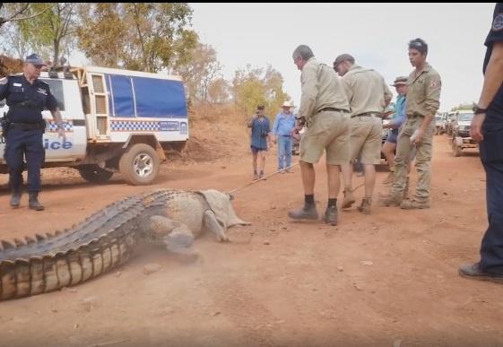 ВАвстралии словили крокодила-убийцу