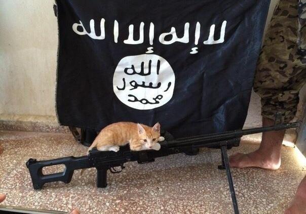 ВМосуле исламские боевики экстремистской группировки запретили разводить кошек