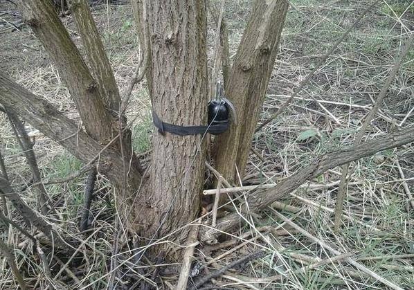 Грибники подорвались намине вСтанично-Луганском районе