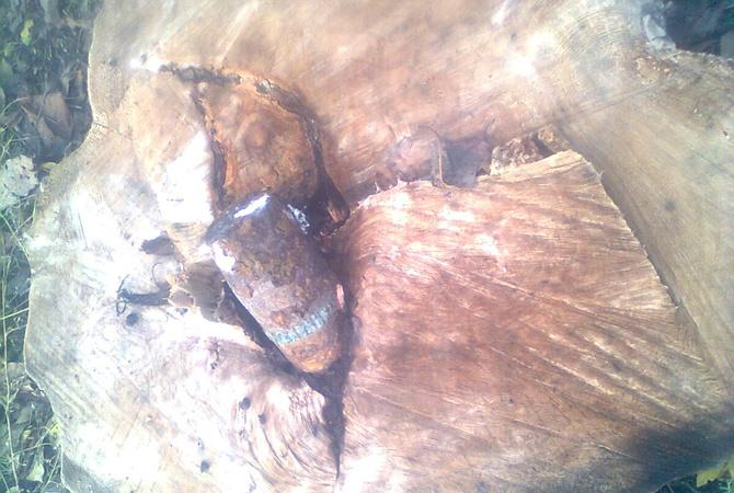 НаЗапорожье враспиленном дереве найден снаряд времен войны