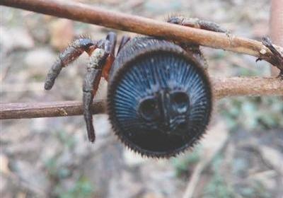 Уникального паука сзагадочным символом обнаружили вКитайской народной республике