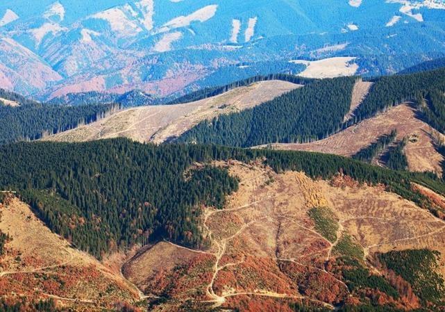 ЕС— Украине: откроете экспорт леса, получите кредит