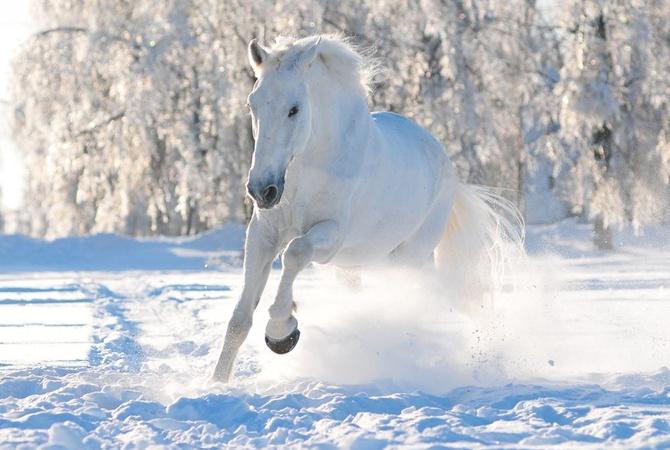 Под Киевом браконьер застрелил племенного коня стоимостью неменее €50 тыс