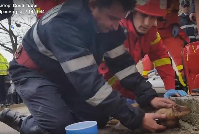 Румынский пожарный спас собаку, сделав ейискусственное дыхание