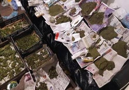 ВЗапорожье Нацполиция изъяла марихуаны на1 млн грн
