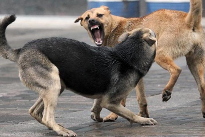 3 совета эксперта, как спастись при нападении собак
