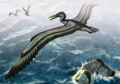 ВИталии отыскали останки гигантского боевого гуся