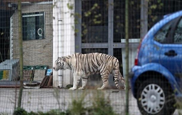 Сбежавший изцирка бенгальский тигр напугал граждан Италии