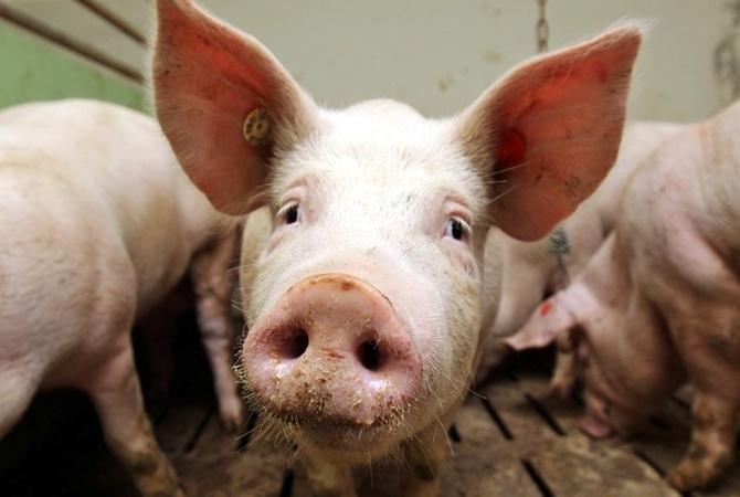 Беларусь ограничит ввоз свинины изДонецкой области