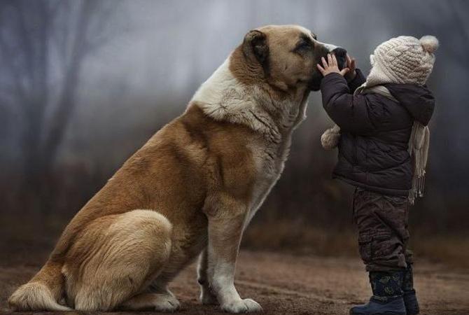 ВАлтайском крае собачка спасла брошенного матерью двухлетнего ребенка