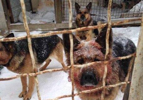 ВВинницкой области соседские собаки загрызли пенсионерку