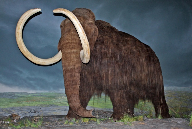 Ученые назвали причину вымирания последних мамонтов наЗемле