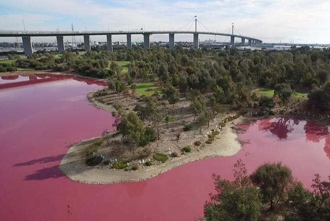 Озеро вАвстралии получило розовый цвет