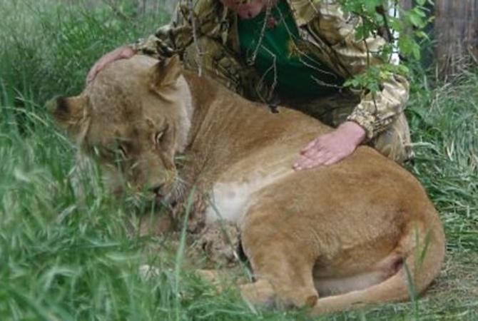 ВЧерниговской области цирковая львица убежала изклетки инапала начеловека