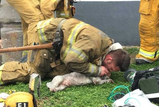 Американский спасатель 20 мин. делал собаке искусственное дыхание и«воскресил» ее