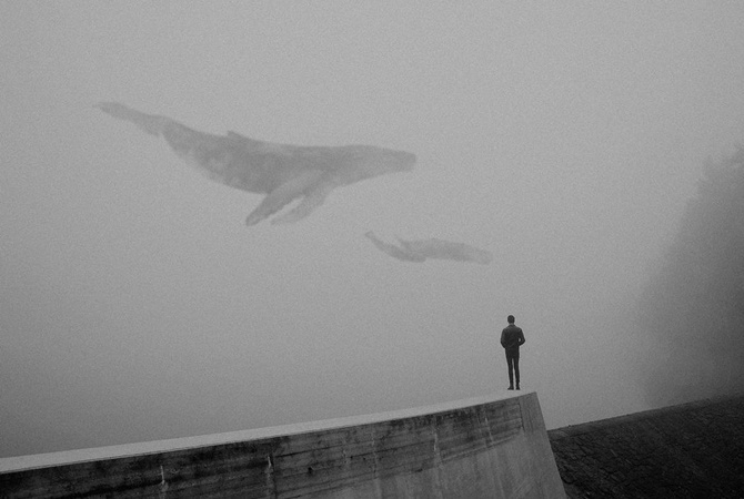 BBC бьет тревогу: «Синий кит» убивает детей вАнглии