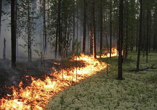 Врадиоактивном лесу уАЭС «Фукусима-1» уже неделю гасят  пожар