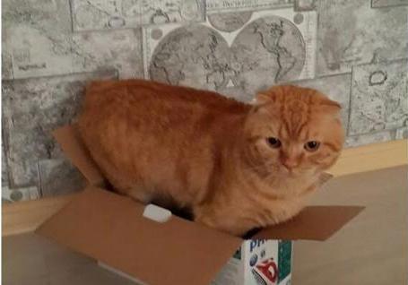 Профессионалы пояснили, почему коты любят сидеть вкоробках