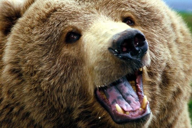 Вовремя циркового представления вБелой Церкви на созерцателей напал медведь