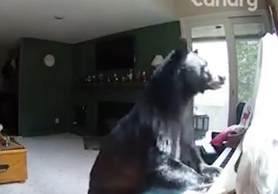 Медведь вломился вдом и«поиграл» напианино