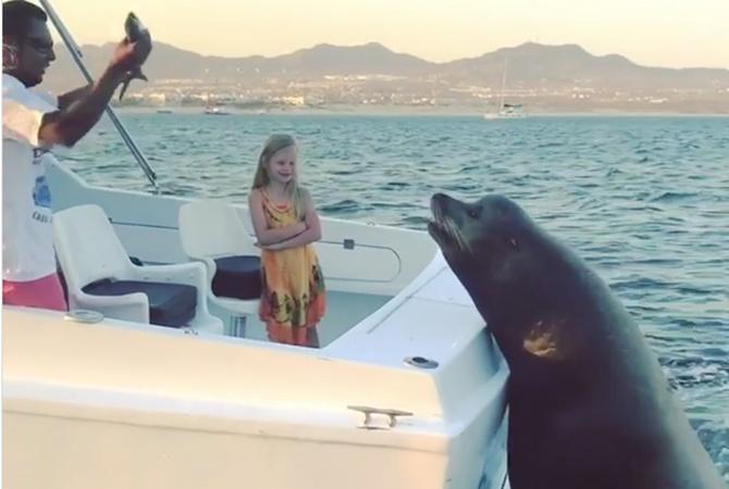 Немалый  тюлень забрался надвижущуюся моторную лодку, чтобы получить рыбу