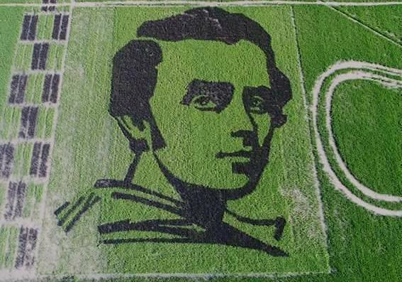 НаХерсонщине селекционеры вырастили портрет Шевченко, который видно изкосмоса