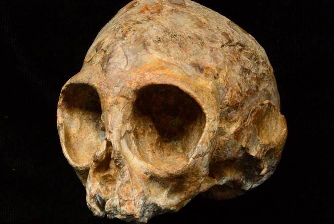 Как выглядел общий предок обезьян ичеловека