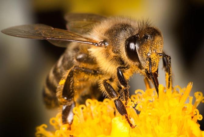 НаХарьковщины смерть мужчины отукуса пчелы расследуют как умышленное убийство