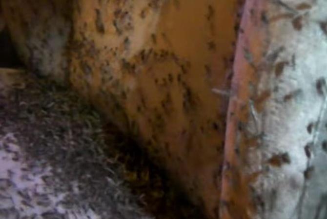 Вавтомобиль рыбака изСибири забились полчища комаров