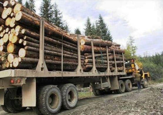 НаЗакарпатье лесовоз сорвался впропасть. есть жертвы