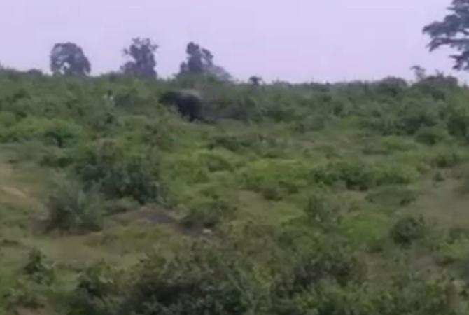 Разъяренный слон вИндии затоптал любителя селфи