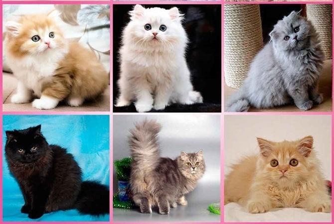 коронавирус энтерит у кошек