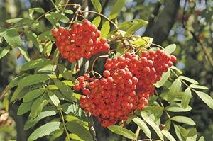 Последние ягоды сезона - как их вырастить в саду фото 2