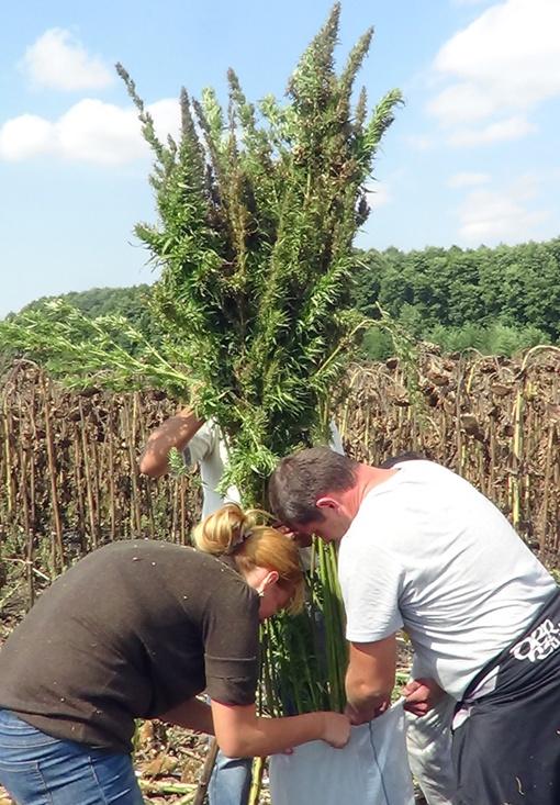 Заросли дурман-травы простирались на 90 га. Фото: пресс-служба УМВД Украины на ЮЖД.