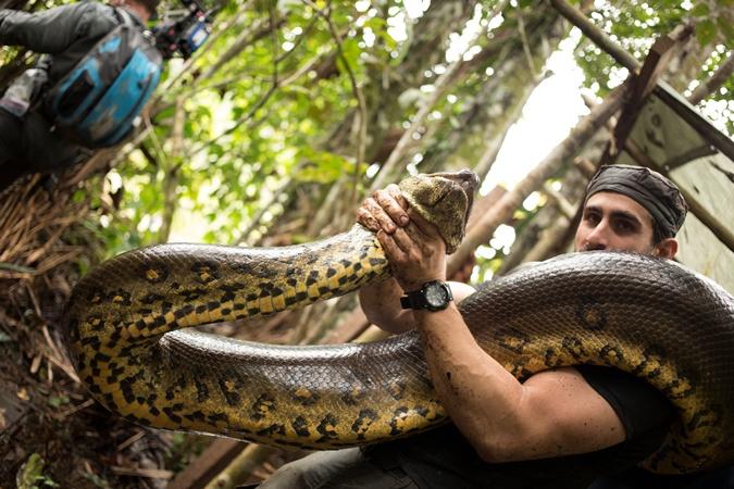В итоге рептилия заглотила голову ученого, обвила тело и шею и пыталась задушить… Фото: Discovery Channel