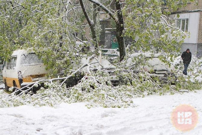 В Днепре повалено 2 600 деревьев.
