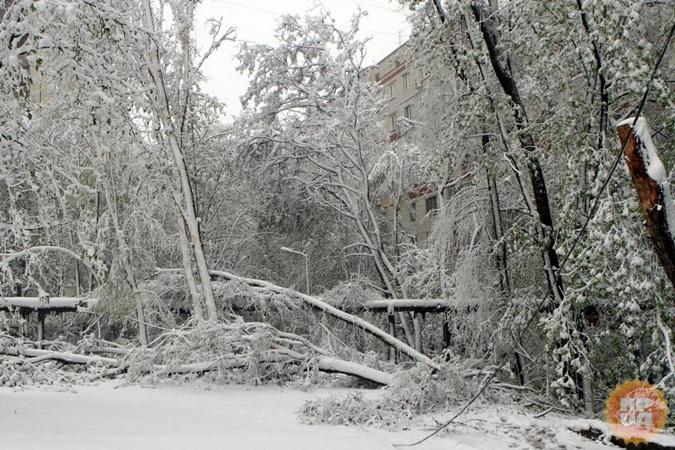 Вероятно деревья в Днепре не отойдут после весенних холодов.
