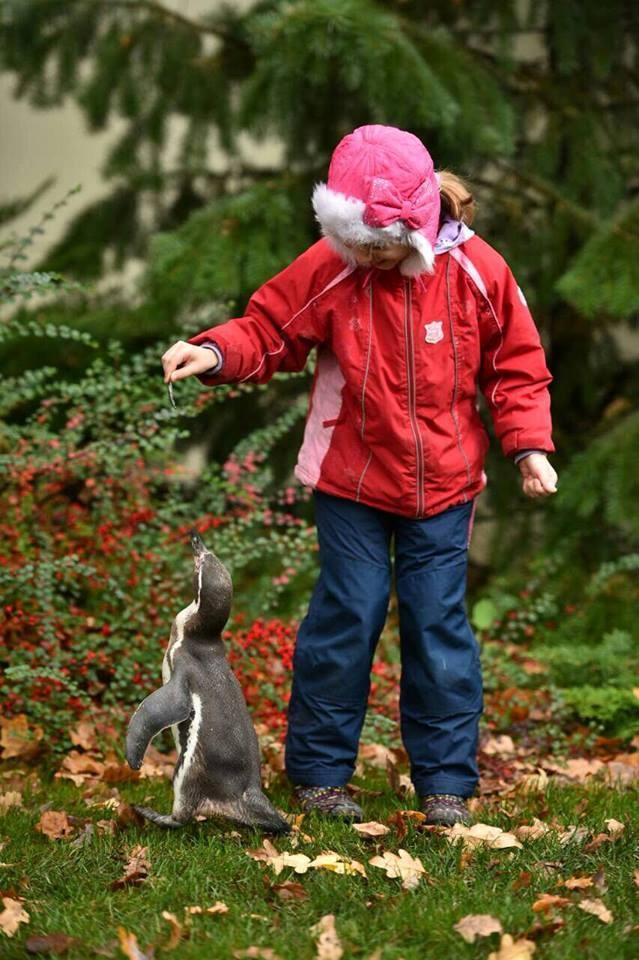 В Харькове одинокому пингвину придется дружить с фламинго фото 2