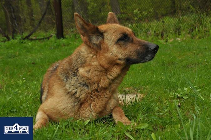 Собаки - спасатели, целители, охранники и вечные друзья фото 2