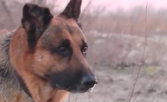 Собаки - спасатели, целители, охранники и вечные друзья фото 3