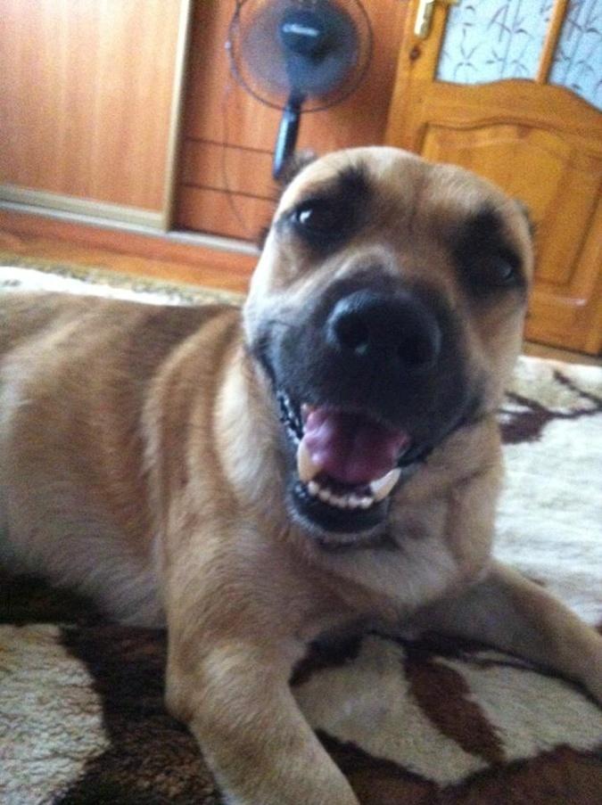 Собаки - спасатели, целители, охранники и вечные друзья фото 1