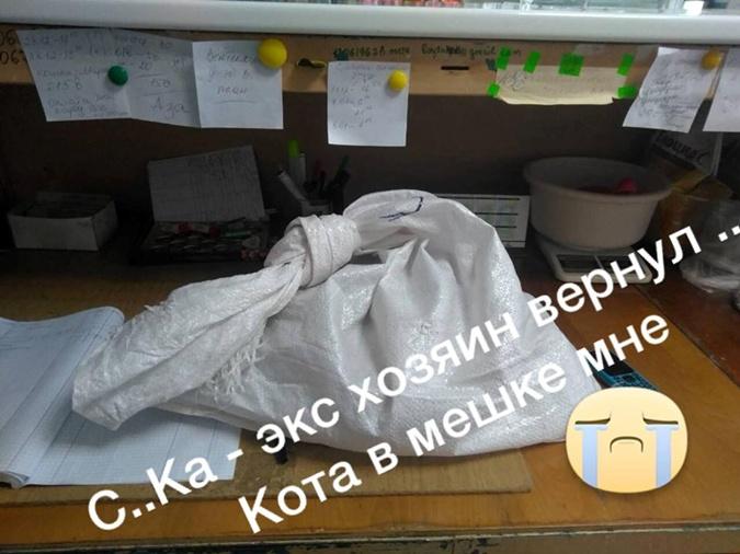 Днепровским волонтерам вернули кота в мешке фото 2