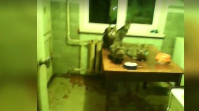 В Белой Церкви жители ОСМД страдают от женщины, в квартире которой живет с полсотни котов фото 2
